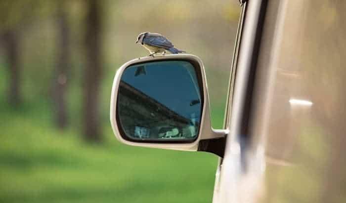 clean-bird-poop-off-car
