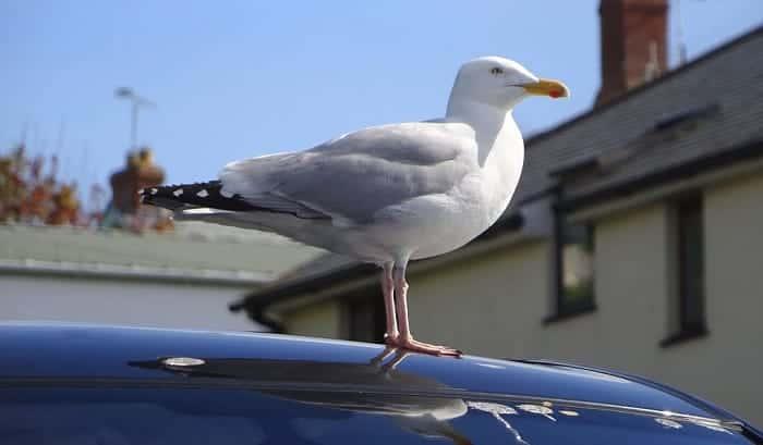 how to get bird poop off car